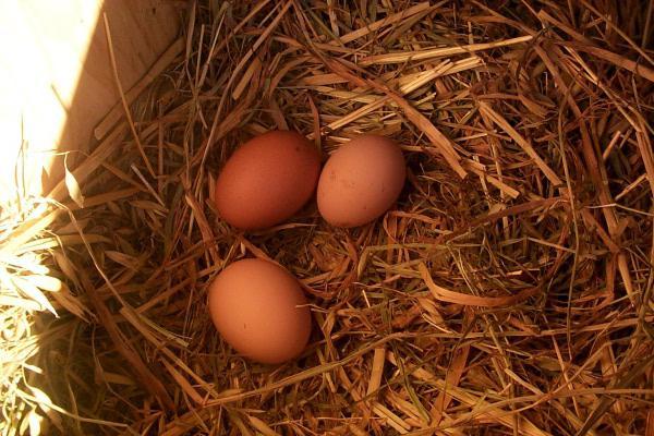 Как сделать чтобы яйца были большими
