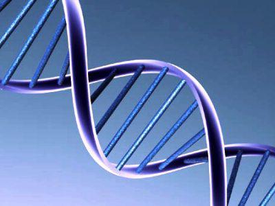 число хромосом