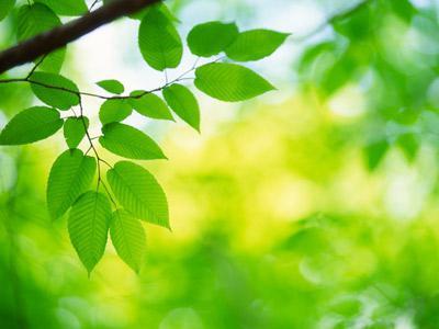 роль растений в природе и жизни человека