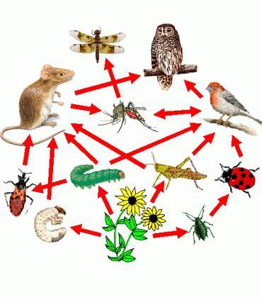 значение растений в природе и жизни человека