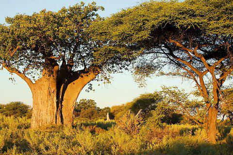 значение зеленых растений в природе и жизни человека