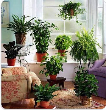 значение растений в жизни