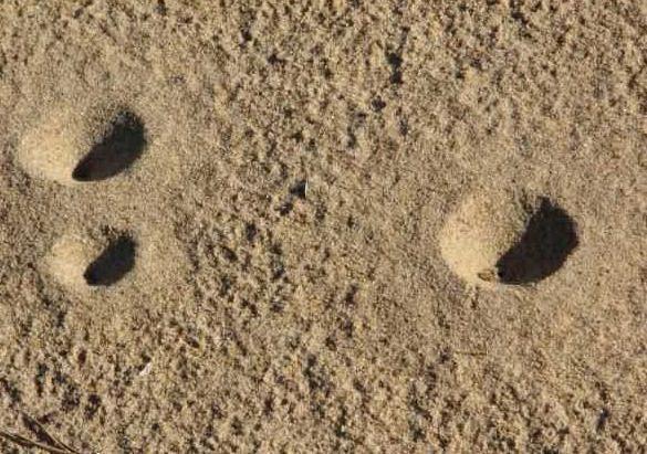 как выглядят личинки глистов у человека фото