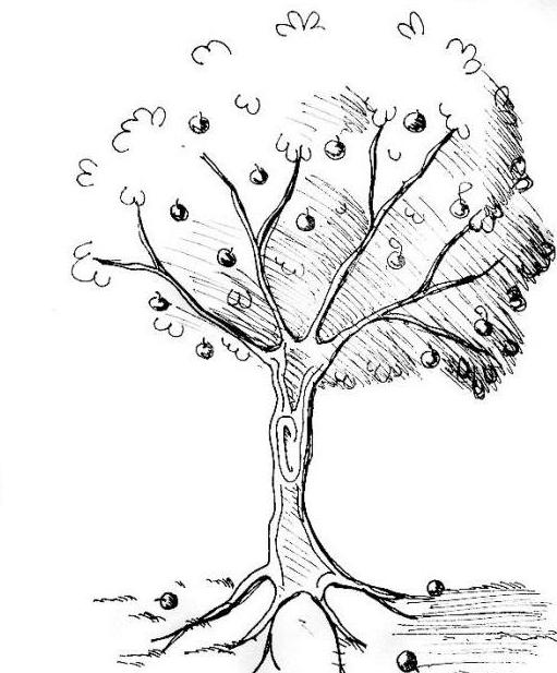 How to draw an Apple tree: an easy way