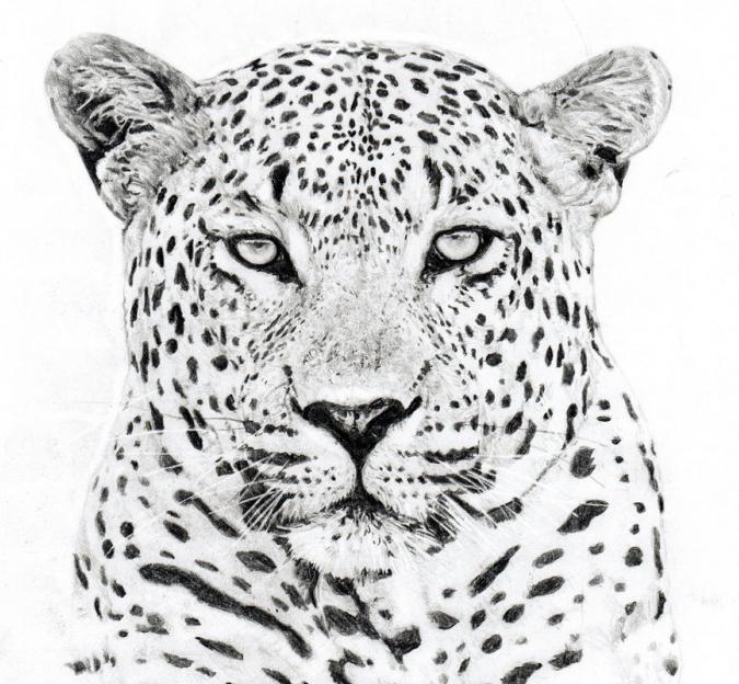 леопард нарисованный карандашом