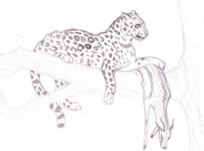 как нарисовать леопарда поэтапно