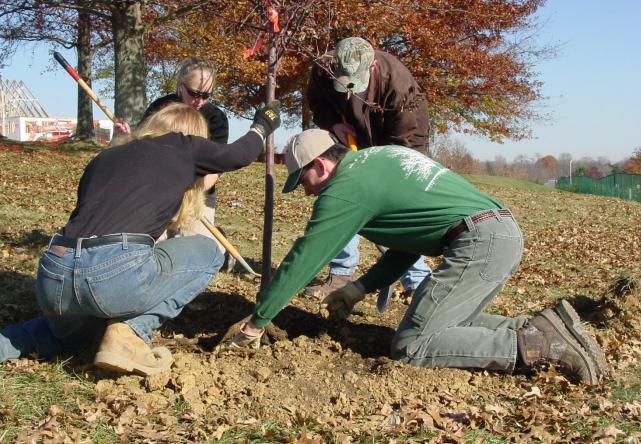Догляд за садом восени  235bde5705b00