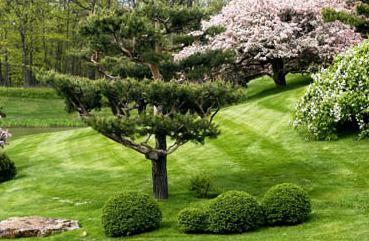 Чем отличаются друг от друга трава кустарник и дерево