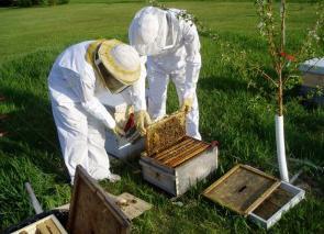 Картинки по запросу инвентарь для пчеловодства