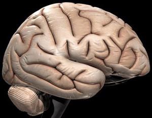 как улучшить кровообращение головного мозга