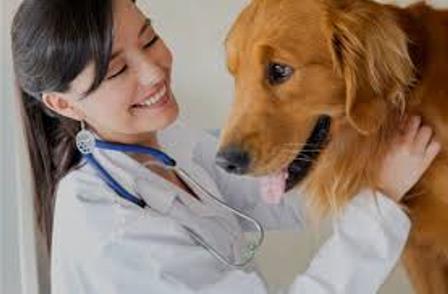 Визитная карточка ветеринарной клиники