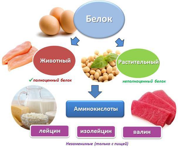 белковая еда список продуктов таблица