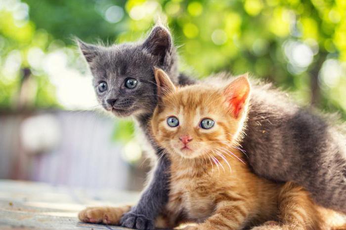 ветеринарные клиники москвы