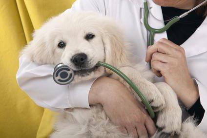 Стерилизация собак за и против