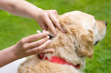 мокрая экзема у собак