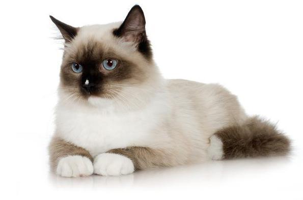 Препараты для кошек и котят