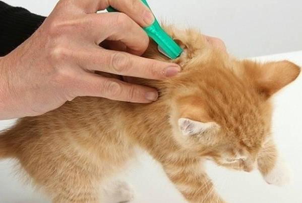 Лечение кошки от отравления в домашних условиях