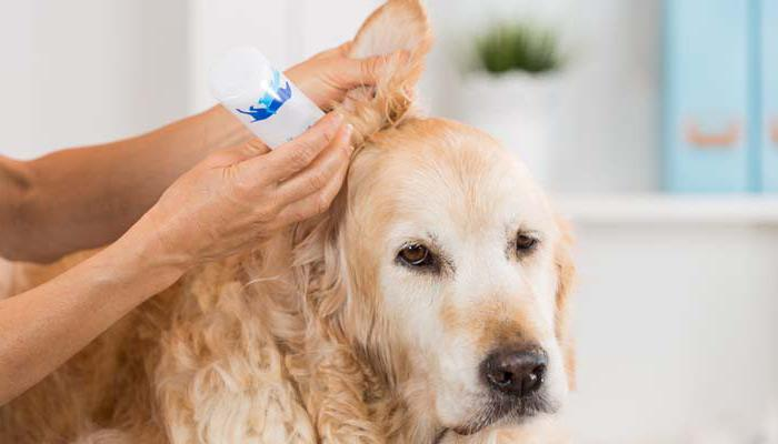 можно ли собакам чистить уши