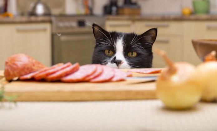 какие овощи полезны кошкам: