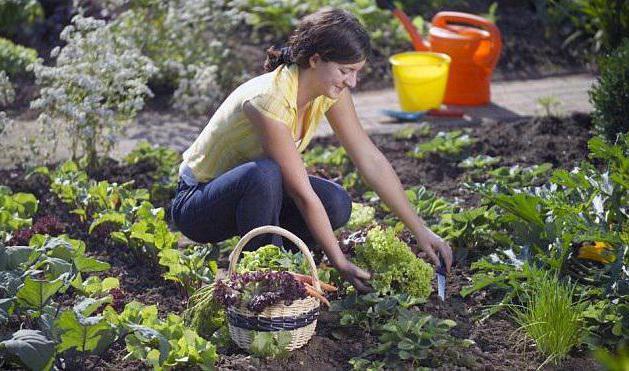 препарат здоровый сад