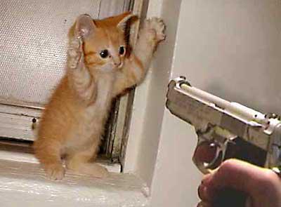 от чего бывает рахит у котят