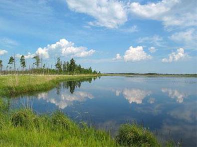 вялье озеро в ленинградской области фото