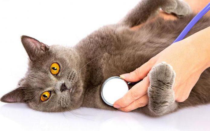 как сделать кошке укол в холку