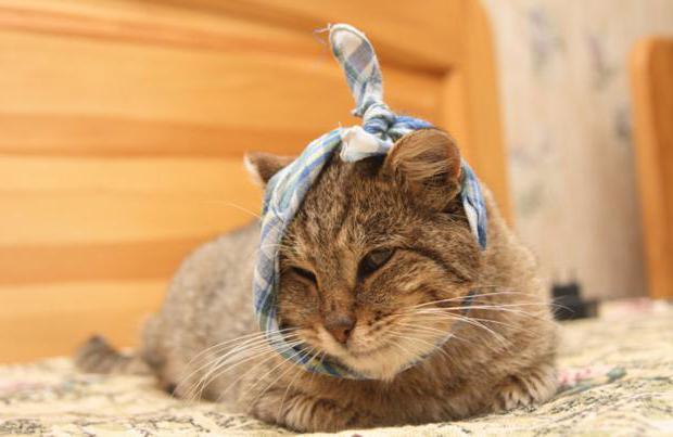 У кошки на шее болячки и чешутся
