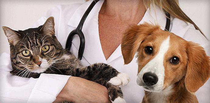 Ветеринарные клиника в люберцах