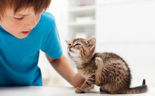 избавиться от блох у кошки народными средствами