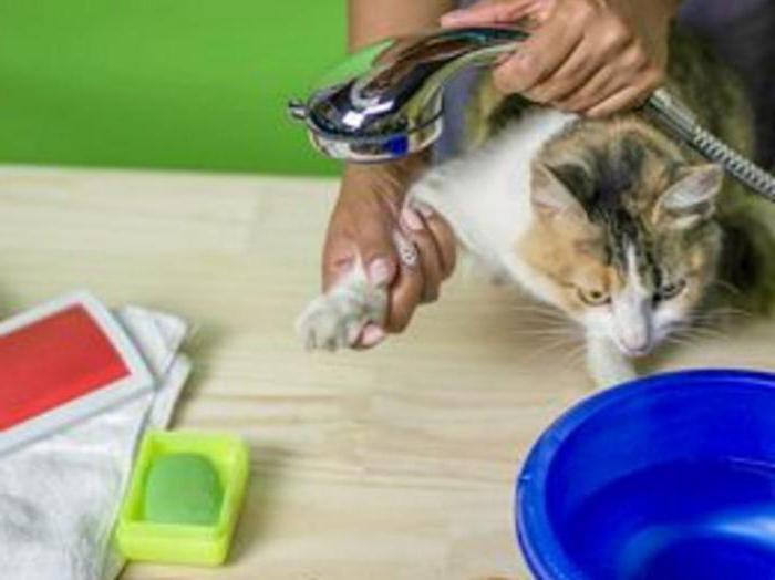 народные средства выведения блох у кошек
