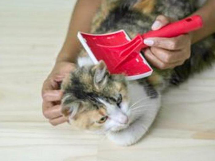 народные средства лечения блох у кошки