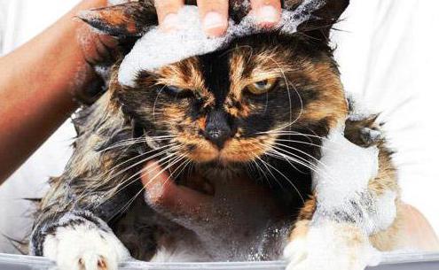 народное средство против блох у кошек
