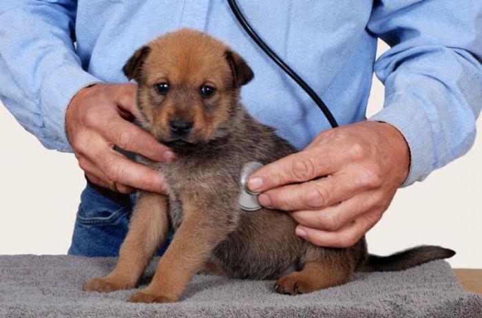 круглосуточная ветеринарная