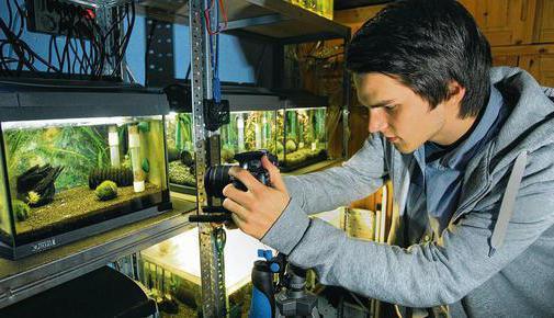 Креветки: разведение и выращивание как бизнес