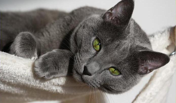 Могут ли коты заниматься сексом после кастрации
