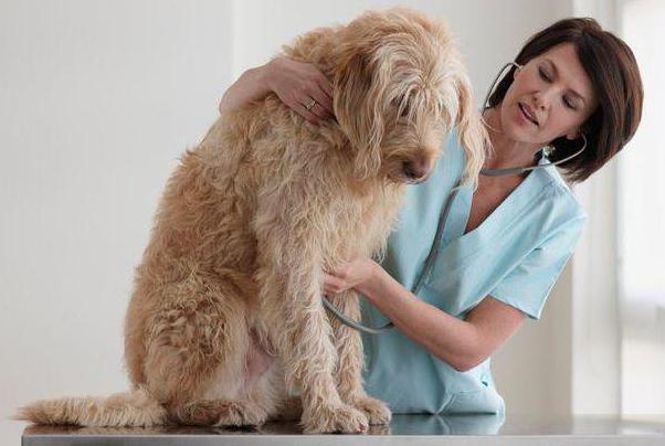 Ветеринарные клиники в люберцах 24 часа