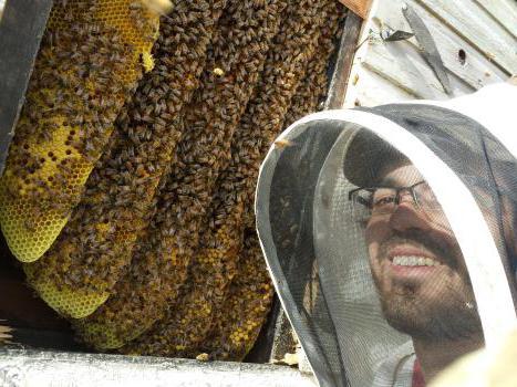 ловушка для пчелиного роя