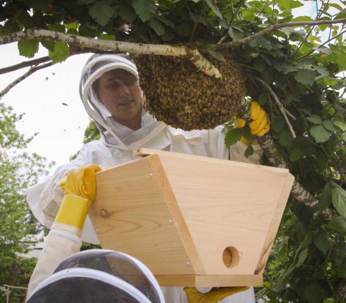 приманка для ловушек пчелами