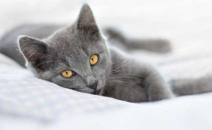 кастрация кота отзывы