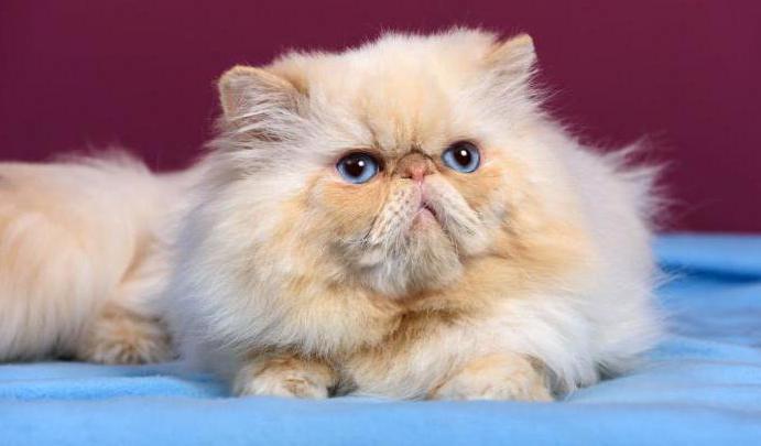 зачем кастрировать кота