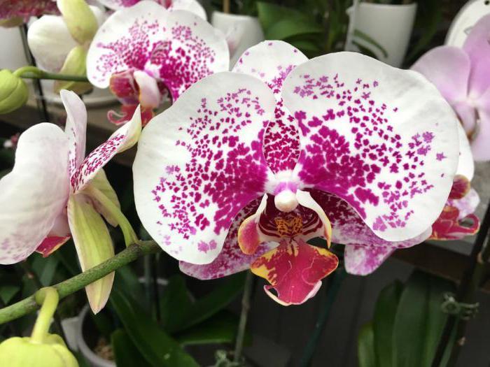 витаминный коктейль для орхидей
