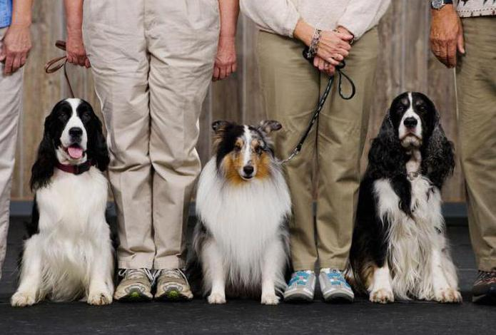 как сделать документы на собаку без родословной