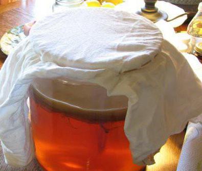как сделать чайный гриб с нуля