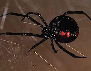 почему нельзя убивать пауков в доме приметы