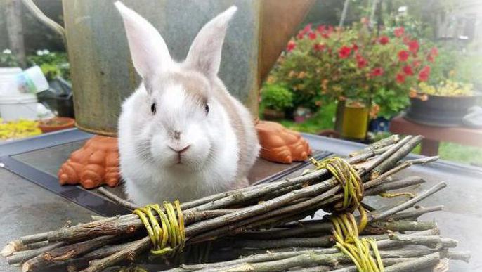 игрушки для декоративных кроликов