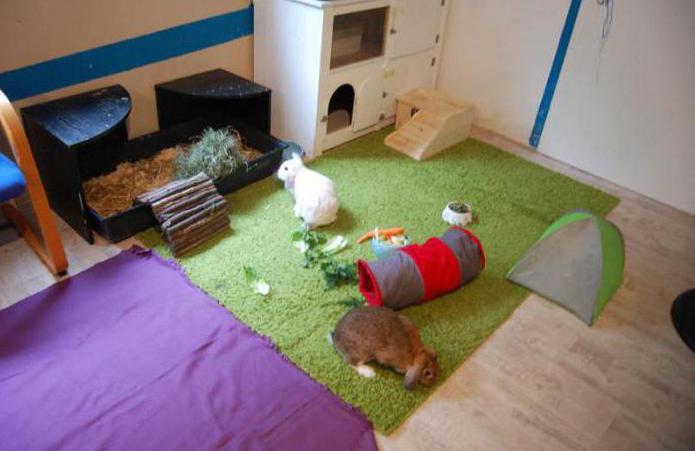 самодельные игрушки для кролика