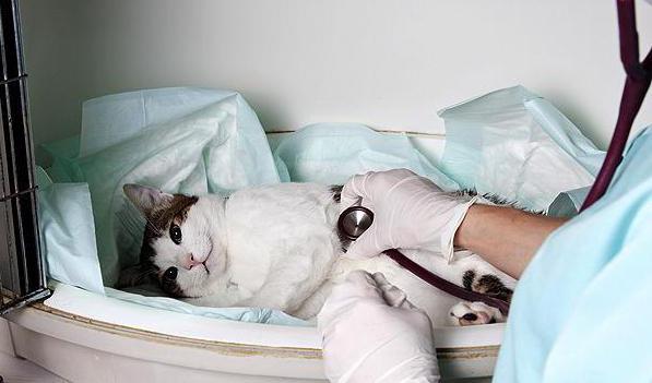 непроходимость кишечника у кошки симптомы течение прогноз