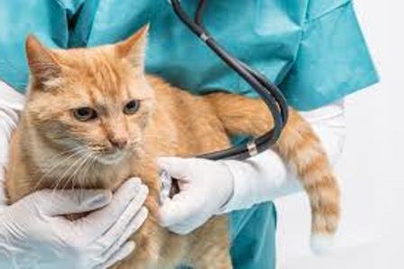 признаки непроходимости кишечника у кошки