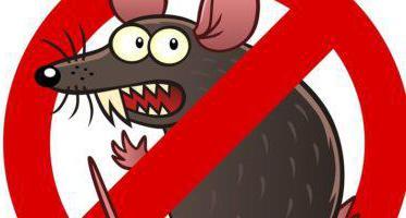 крысиная смерть 1 отзывы